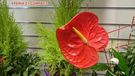 Flor_Compact_OK